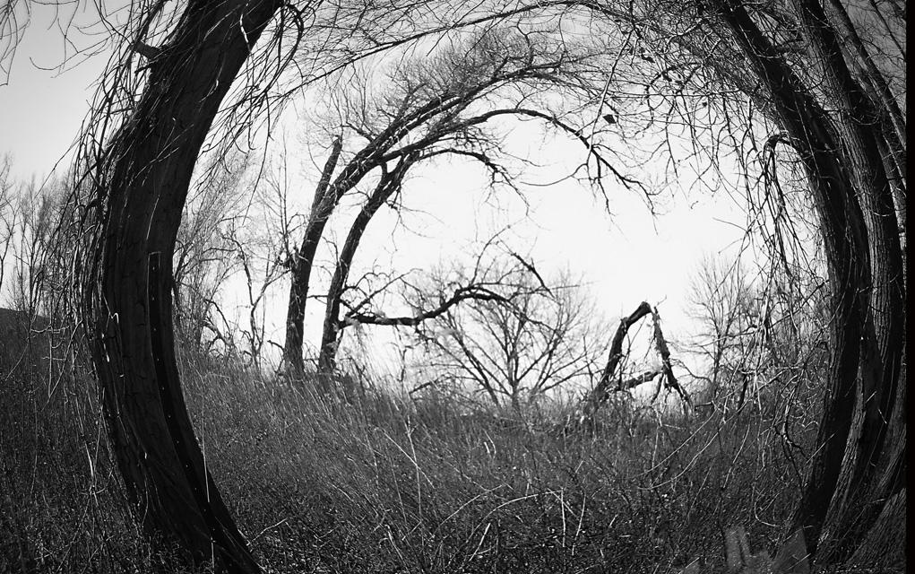 """Circle of Trees"""