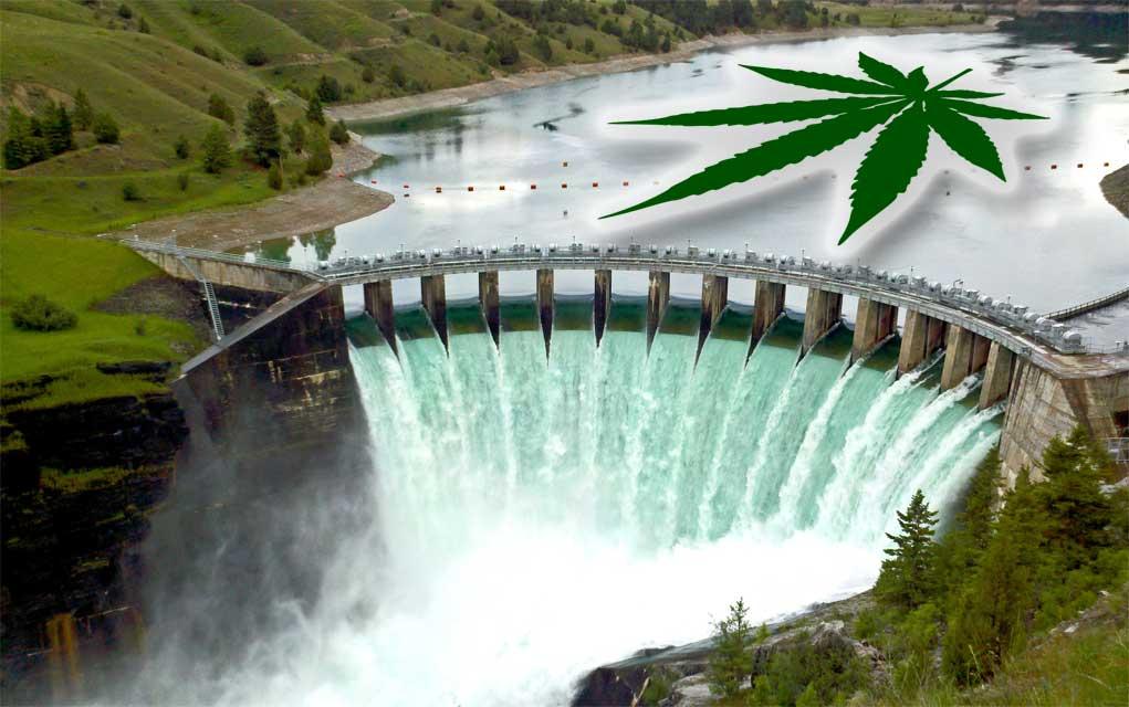 legalization of marijuana essays